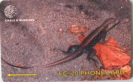 DOMINIQUE  -  Phonecard  -  Cable § Wireless  - Ground Lizard  -  EC $ 20 - Dominica