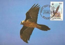 Lammergeier Vulture Bird Of Prey Maxi Card Postcard FDC WWF Lesotho Maseru - Lesotho