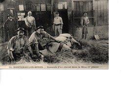 MONTCEAU LES MINES Descente D'un Cheval Dans La Mine (2e Phase) - Montceau Les Mines