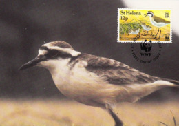ST. HELENA 1993 MAXIMUM CARD - BIRDS - ST HELENA WIREBIRD (Charadrius Sanctaehelenae) - Sainte-Hélène