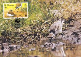 ST. HELENA 1993 MAXIMUM CARD - BIRDS - ST HELENA WIREBIRD (Charadrius Sanctaehelenae) - Sint-Helena