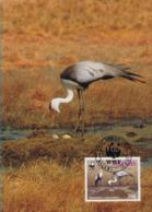 Oiseaux (Wattled Crane) Birds MALAWI Animals Aves Faune Carte Maximum Card WWF - Malawi