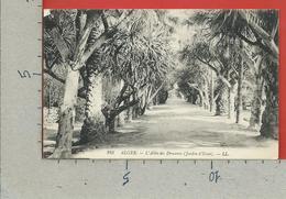 CARTOLINA NV ALGERIA - ALGER - L'Allee Des Dracenas (Jardin D'Essai) - 9 X 14 - Algeri