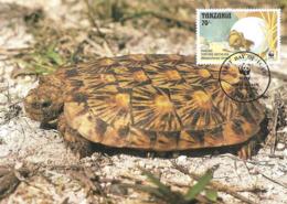 1993 - DAR ES SALAAM Tanzania - Pancake Tortoise - Tortue De Tornier - Tanzanie
