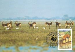 1987 - Zambia NDOLA - Black Lechwe - Antilope - Zambie