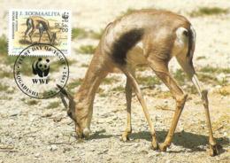 1992 - MOGADISHU - SOOMAALIYA - Gazelle Speke - Somalie