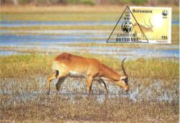 1988 - BOTSWANA GABORONE - Red Lechwe - Antilope Kobus Leche - Botswana