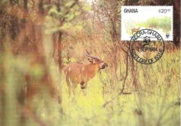 1984 - GHANA Accra - Bongo Antilope - Ghana - Gold Coast