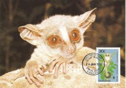 TANZANIA 1989 - DAR ES SALAAM - Lemur Zanzibar Galago - Lemurien - Tanzanie