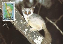 TANZANIA 1989 - DAR ES SALAAM - Lemur Lesser Bushbaby - Lemurien - Tanzanie