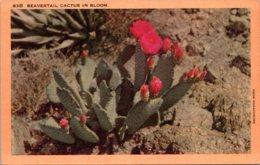Cactus Beavertail Cactus In Bloom - Cactusses