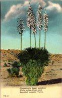 Cactus Yucca In Bloom - Cactusses