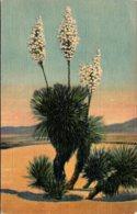 Cactus Desert Yucca In Bloom Curteich - Cactusses