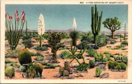 Cactus A Few Varieties Of Desert Cacti - Cactusses