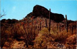 Cactus Giant Sahuaro Cactus And Ocotillo Cactus In Bloom - Cactusses