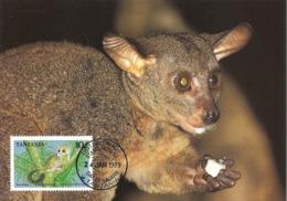 TANZANIA 1989 - DAR ES SALAAM -Lemur Thick Tailed Bushbaby - Lemurien - Tanzanie