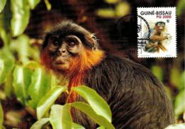 1992 - GUINE BISSAU - Western Red Colobus Monkey - Colobe Bai Singe - Guinea-Bissau