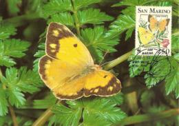 1993 - SAN MARINO - Papillon Souci - Clouded Yellow - Saint-Marin
