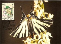 1993 - SAN MARINO - Papillon Flambé - Scarce Swallowtail - Saint-Marin
