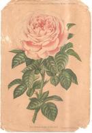 77 GRISY-SUISNES - Ensemble De 34 Planches Extraites Du JOURNAL DES ROSES (Suisnes Près Brie-Comte-Robert) - Rose, Fleur - Frankreich