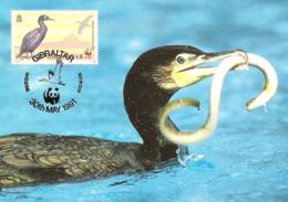 1991 - GIBRALTAR - Shag - WWF - Gibraltar