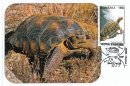 MAX 26 - 242 TURTLE, Romania - Maximum Card - 2010 - Tortues