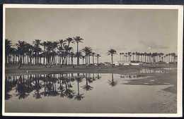 FA704 BENGASI - PALMETO DI SABBRI - Libia