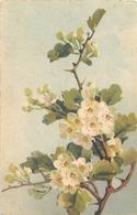 TOP 408 - CPA Original  Fleurs -  Signée  Catharina KLEIN - Bon état,  Voir Scan Recto Verso - Klein, Catharina