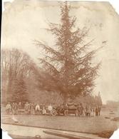 Photo D'ouvriers œuvrant à La Plantation D'un Arbre En Vue De La Création Du Parc D'un Château Années 1920 - Mestieri