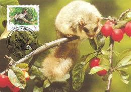 1994 - LATVIJA Lettonie  - RIGA - Edible Dormouse - Loir Gris WWF - Lettonie