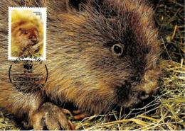 1995 - BELARUS Беларусь - Minsk Castor Fiber - European Beaver WWF - Belarus