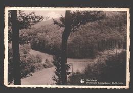 Martelange - Promenade Köenigsbourg Perlé-Holtz - Nels Bromurite - Martelange