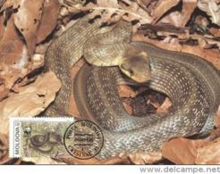1993 MOLDAVIA Ckisinau  - Couleuvre D'Esculape - Aesculapian Snake  -  WWF - Moldavie