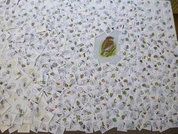 477 Verschillende Stuks Met Eerste /Speciale Dagafstempel Op Vogels/Buzin  Fragment ,mooie Verzameling - 1985-.. Oiseaux (Buzin)