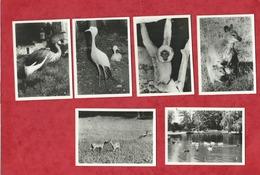 11 Petites Photos - Clères  - Parc Zoologique - Clères