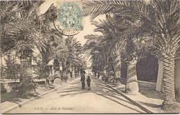 06 - NICE - Allée De Palmiers - Nizza