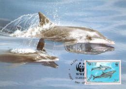 1993 - NIUE Alofi - Rough Touthed Dolphin - Dauphin à Long Bec WWF - Cartes Postales