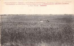 20-4024 : CHATEAUNEUF SUR CHER.  CULTURE DE BLE HYBRIDE. ETABLISSEMENTS GALTIER D'AURIAC. TOULOUSE. - Chateauneuf Sur Cher