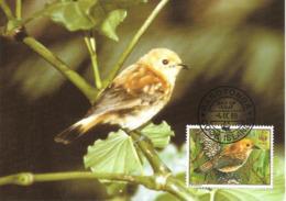 1989 - COOK ISLANDS - Rarotonga Flycatcher - Oiseau Mouche WWF - Cook