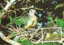 1989 - COOK ISLANDS Rarotonga - Fruit Dove -  Ptilope Nain WWF - Cook