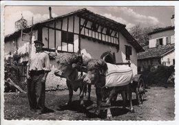 Cp Pays Basque Attelage De Boeufs - Autres Communes
