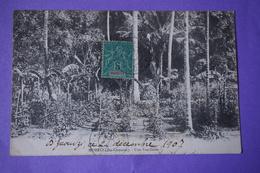 CPA MOHELI ILES COMORES VANILLERIE RARE METIER AGRICULTURE PLANTATION PHILATELIE TIMBRE SURCHARGE MAYOTTE 1907 - Comores