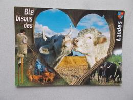 BIG BISOUS DES LANDES (40 ) ANIMAUX Et ECHASSIER LANDAIS - France