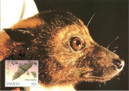 1993 - SAMOA - Tongan Fruit Bat - Chauve Souris Rousette Fructivore De TONGA - Samoa
