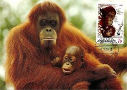 1989 - INDONESIA - Jakarta - Orangutan Orang-outan  WWF - Indonesië