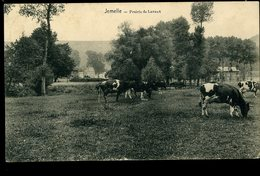 Jemelle Prairie Du Lavaux Vaches Animée Desaix - Rochefort