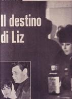(pagine-pages)LIZ TAYLOR    L'europeo1961/804. - Autres