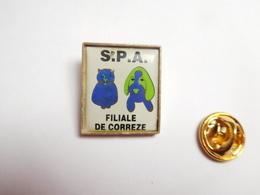 Beau Pin's , SPA , Chien & Chat , Filiale De Corrèze - Animaux