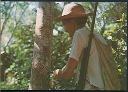 °°° 19878 - BRASIL - MANAUS - SERINGUEIRO °°° - Manaus
