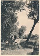 Nederland - 1946 - 5 Op 7,5 Cent Veth, Fotokaart Haaren (NB) Weg Op Zandgronden, Briefkaart G287f - Ongebruikt - Ganzsachen